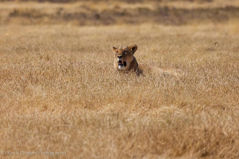 Ngorongoro-34.jpg