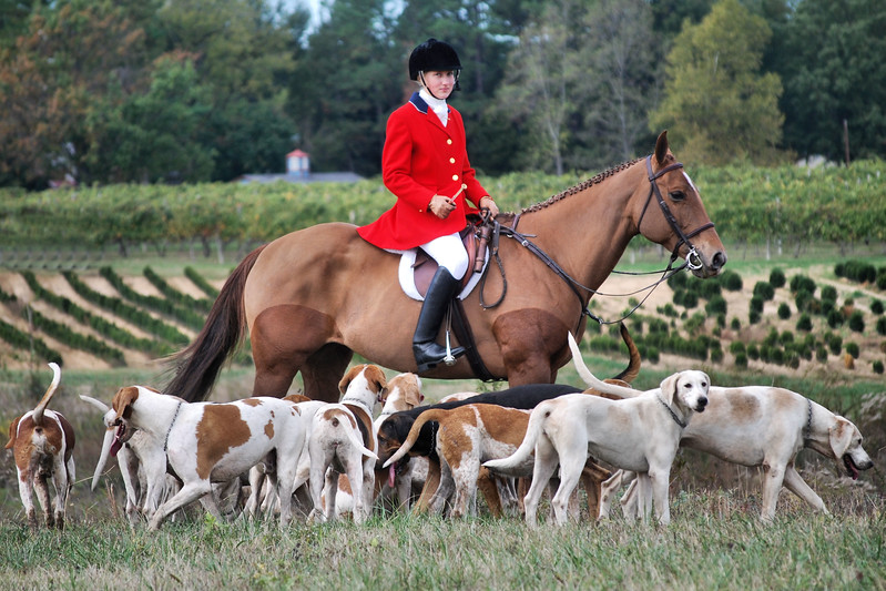 Commonwealth Foxhounds