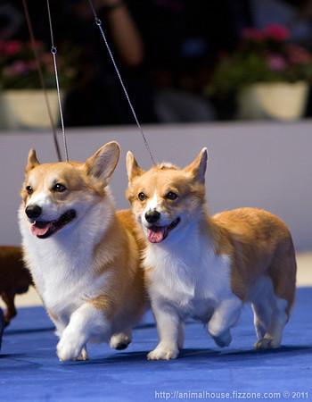 World Dog Show 2011