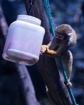 Oakland  zoo May 2016