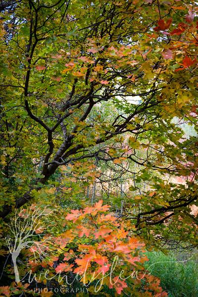 wlc snake creek fall 100219 392019.jpg