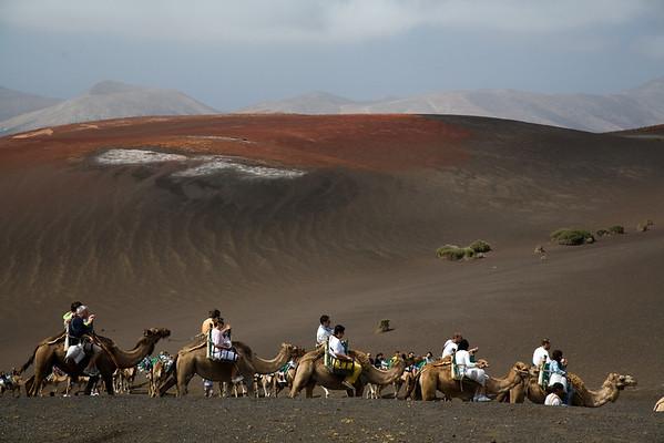 Timanfaya Camel Ride