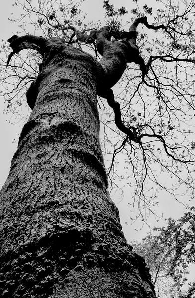 Nijole Shuberg Photography-5.jpg