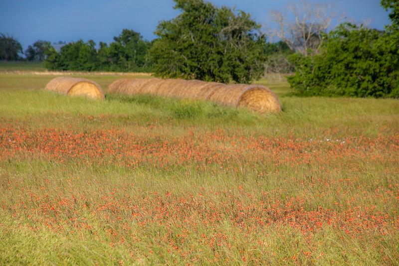 2016_4_9 Texas Wildflower Shoot-8792.jpg
