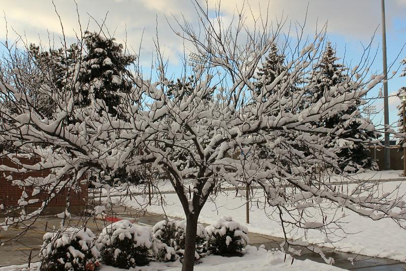 Winter_Scenery_12_19_2012_4061.JPG