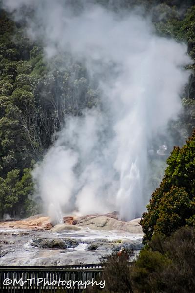 Erupting Pohutu geyser Te Puia