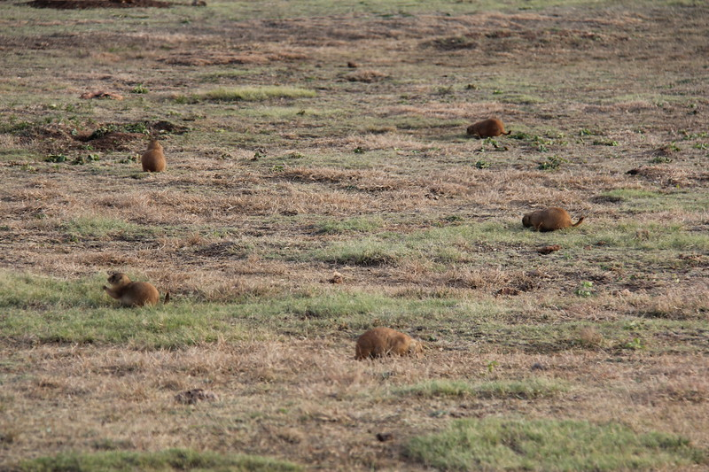 20171120-007 - Texas - Caprock Canyons SP - Prarie Dog Town.JPG