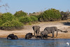 Elephants on the Bank of the Chobe River
