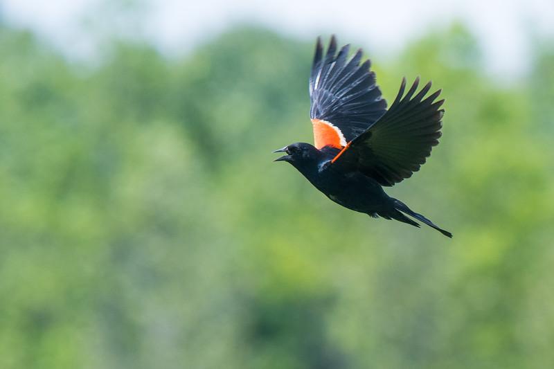 2019.06.07-Birds-03.jpg