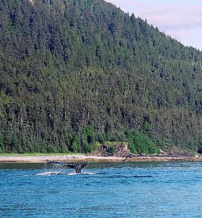 Alaska fauna and flora