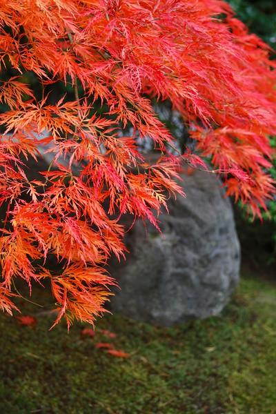 Portland Japanese Garden 10-17-13