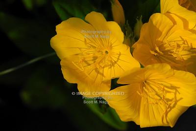 05/29/10 Flowers