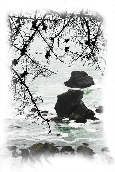 Nature Site 1_10.jpg