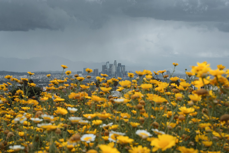 Downtown Los Angeles skyline with wildlfowers