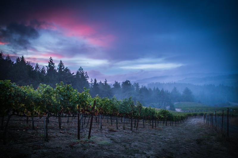 Sunset Storm over Vineyards