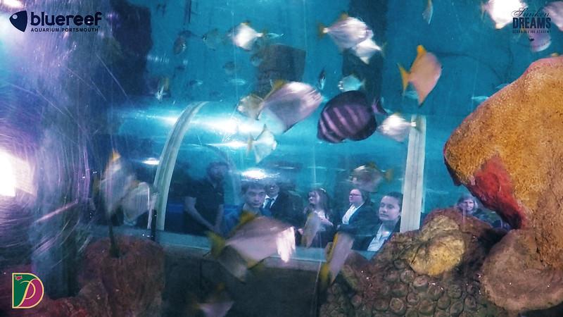 Blue Reef.00_23_08_30.Still036.jpg