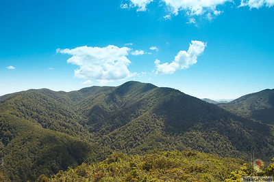 Tararua Forest Park -Wairarapa