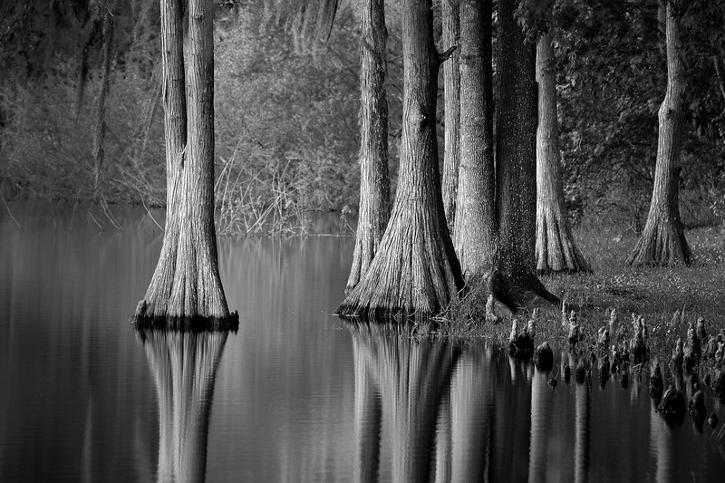 Dead Lakes at Wewahitchka, FL