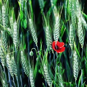 Ephemere / Bouquet de fleurs