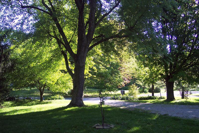 trees 065.jpg