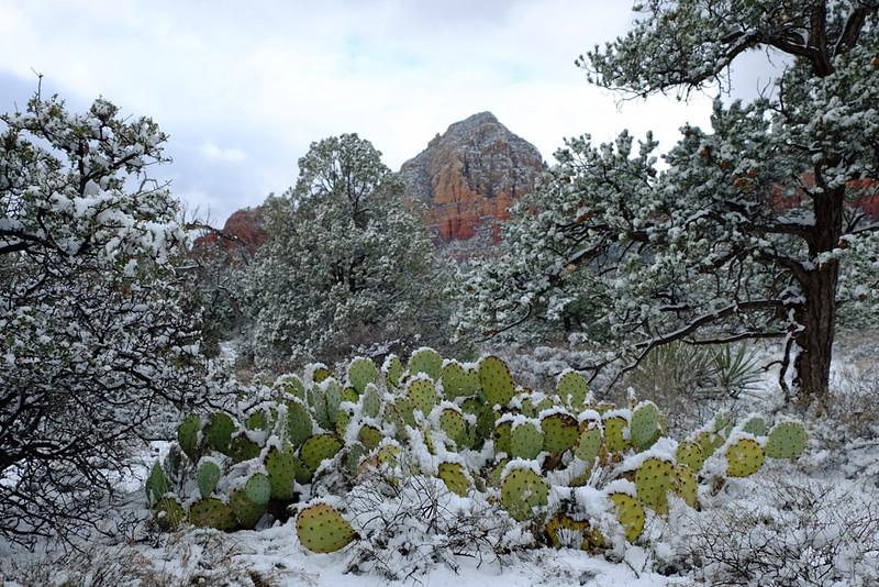 Sedona red rocks cactus.jpg