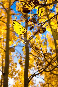 Fall Color at Beaver Creek, CO