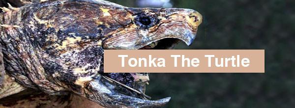 tonka_headlinner.jpg