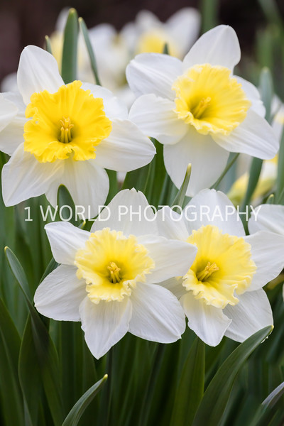 20190416Spring Flowers_Cantigny 4_17_19123--84.jpg