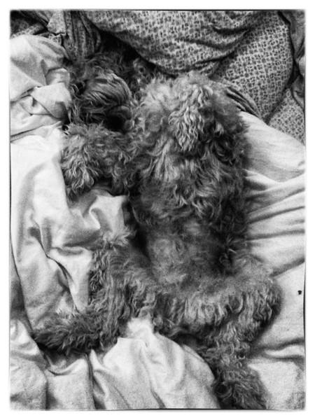NappingBoy.jpg