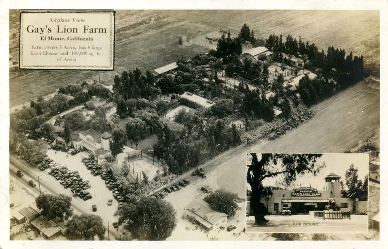 Gay's Lion Farm Ariel