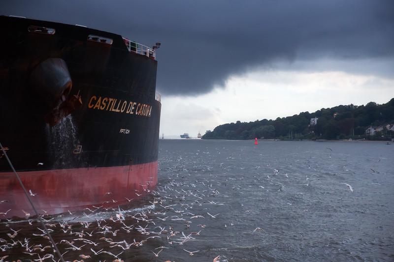 Möwen vor dem Bug Massengutfrachter auf der Elbe Hamburg