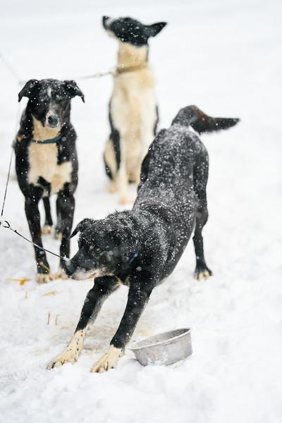 15    RobertEvansImagery.com IG @RobertEvansImagery   Klondike Dog Sled Race 2-9-2020.JPG
