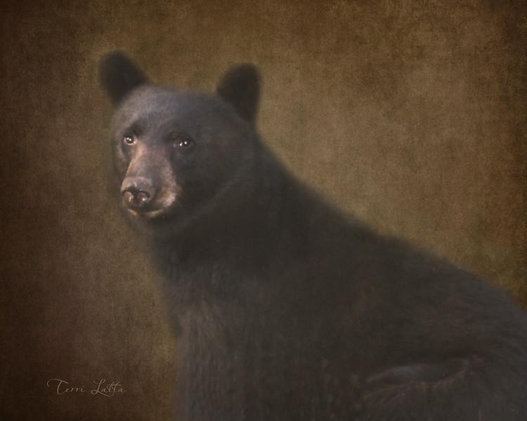 IMG_0526 bear 16x20 jpg.jpg