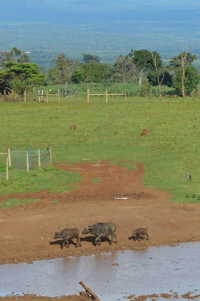 East Africa Safari 73.jpg