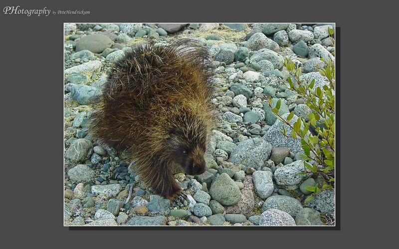 My Alaska 12-08-011.jpg