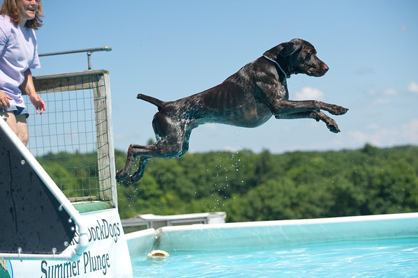 Sleepy Hollow GSP Club - dock diving