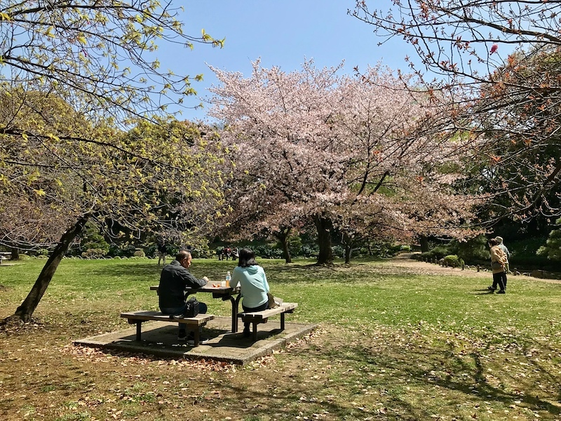 The cherry grove at Kiyosumi-teien Garden.