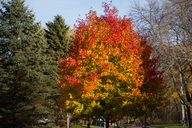 Late Fall Color-2.jpg