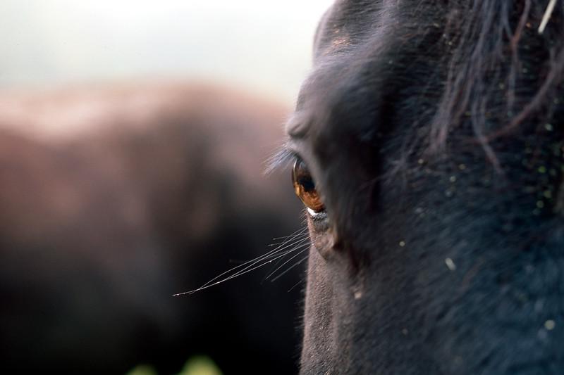1-horse-eye-Provia-100.jpg