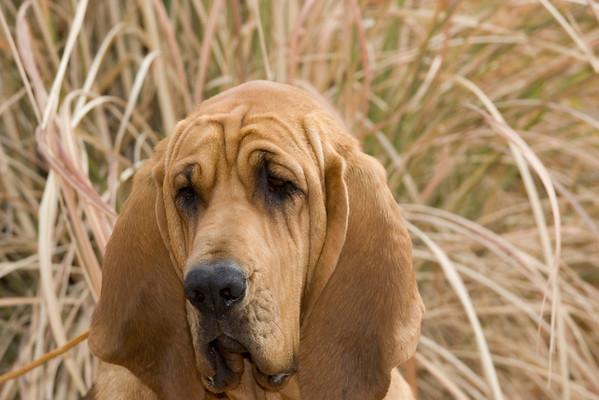 Bloodhound MG
