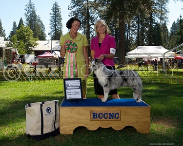2010 Border Collie Specialty Winners Photos