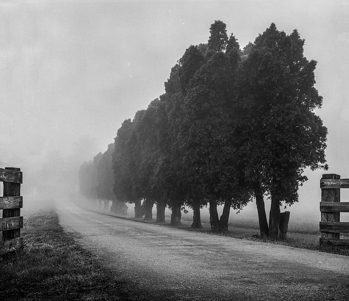 Deet's Foggy Farm Lane, Tipp City OH