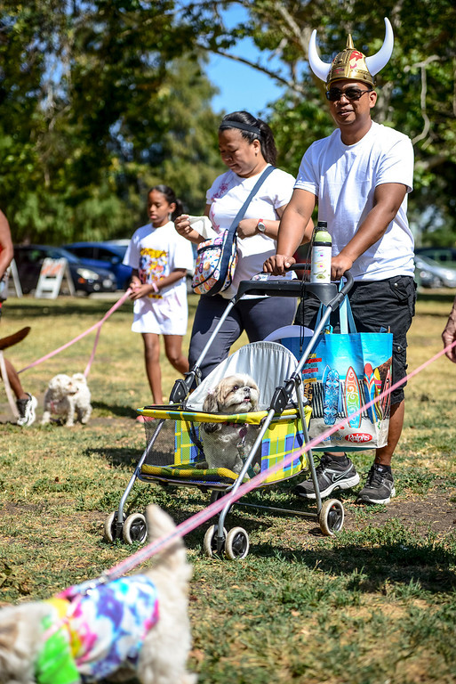 ". Pommel Btinalla of Van Nuys pushes his dog ""bubbles\"" at the second annual PAWSAPALOOZA dog walk and festival at Woodley Park in Van Nuys on Sunday, May 4, 2014.    (Photo by David Crane/Los Angeles Daily News)"