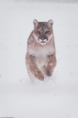 Animals of Montana 2009