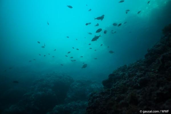 WWF Meeres-Verbundete 05 2018
