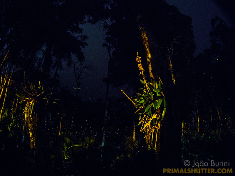 Clearing with fireflies and bromeliads on trees