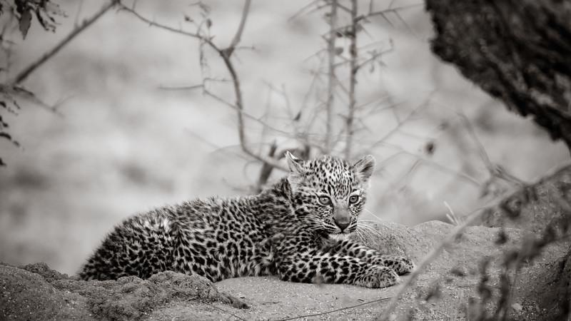 LeopardHills-20150825-2169.jpg