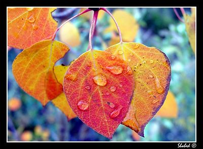 Fall Color_I