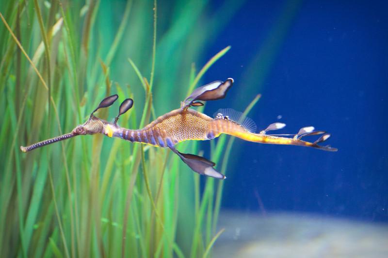Monterey Bay Aquarium-2392.jpg