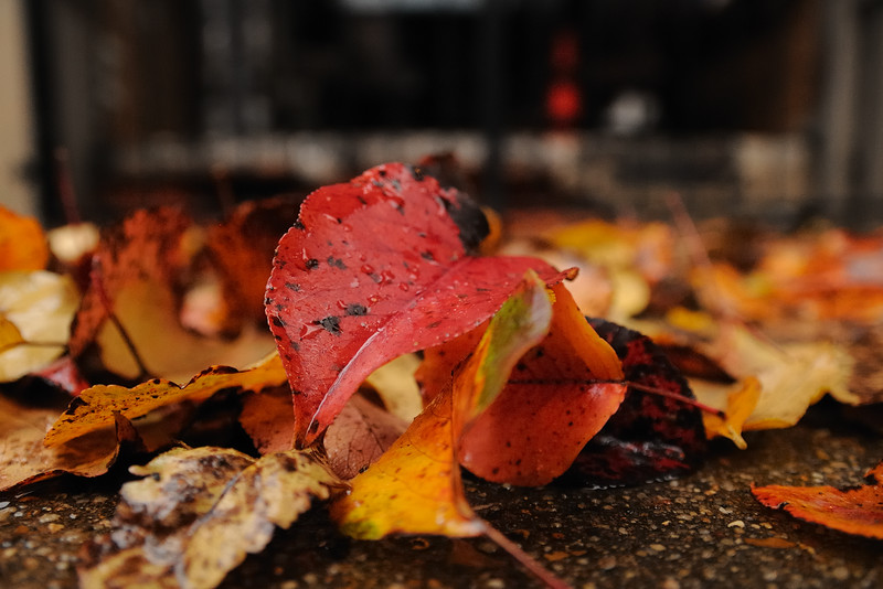 The fall of autumn.
